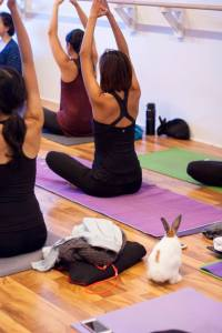 Animal Therapy and Yoga provide benefits for our body, mind and spirit. Plus raised money for a great cause - Small Animal Rescue Society of BC.